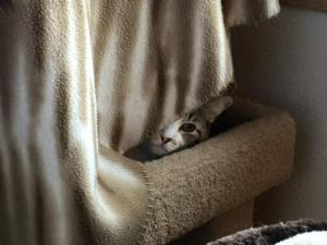Gizmo hiding...sort of